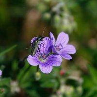 Лесной житель и цветы :: Наталья Казанцева