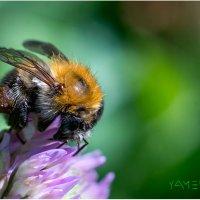 пчелка16 :: yameug _