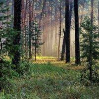 Рассветным гимном тишины... :: Лесо-Вед (Баранов)