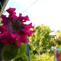чудо-цветик :: Оксана Таран