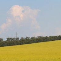 Жёлтое поле. :: Инна Кузнецова