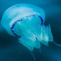 Медуза :: Андрей Воробьев