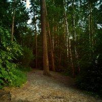Лес :: Ксения Спиридёнок