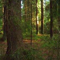 Старый лес :: Григорий Кучушев