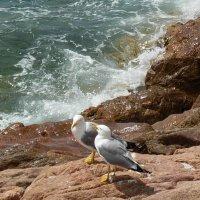 Чайки Средиземноморья :: Алла Захарова