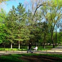 Прогулка в парке... :: Тамара (st.tamara)
