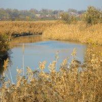 Река Самбек. :: Лариса Авдонина