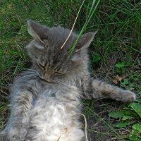 Я на солнышке лежу! :: Наталья