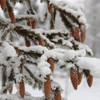 Зимний этюд :: Андрей Юзеев