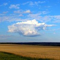 Облака над полем :: Татьяна Ломтева