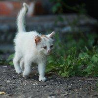 котёнок :: Вадим Виловатый