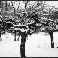 Из зимнего. :: Ирина Прохорченко