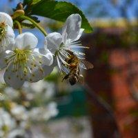 Вспоминая весну. :: Catherine Bugrovskaya