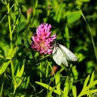 От цветка к цветку... :: Galina S*