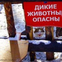 Страшнее кошки зверя нет! :: Вадим Кудинов