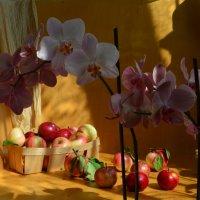 Первые яблоки воскресным утром :: Наталия Лыкова