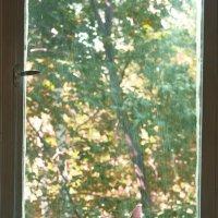 Кот у окна. :: Полина Ямина