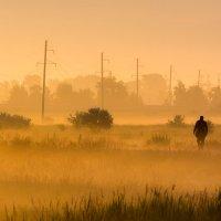 Линия жизни :: Антон Жирнов