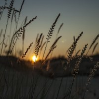рассвет :: Litana *
