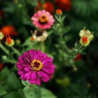 Цветы. :: Руслан