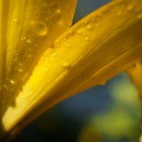 После дождя :: Виктория Альшанец