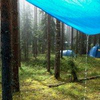 Нормальный летний дождь. :: Яков Реймер