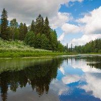 река Оредеж :: Михаил Бояркин