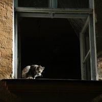 кошка на окошке :: Наталия Акимова