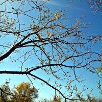 деревья :: Татьяна Королёва