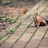 Белка в парке. :: Алексей Хаустов