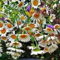 Роскошный букет полевых цветов :: Валентина Пирогова