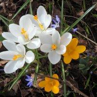 Весна ... :: Ludmil Sams