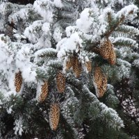 Зима ... :: Ludmil Sams