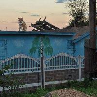 Тише, мыши, кот на крыше! :: Ирина Данилова