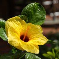 Цветок №18 :: Сергей Анисимов