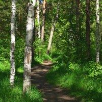 Светящийся лес :: Сергей Миклухин