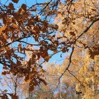 осень :: Ольга Пахомова
