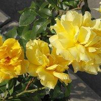 Цветы для Друзей! :: Елена Олейникова