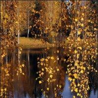 Золото осени :: Виктор Колмогоров