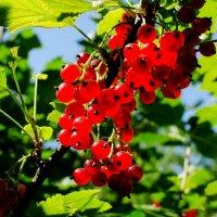 Солнечная ягода :: Ирина Шарапова