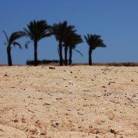 Песок.Пляж.Пальмы. :: Mayya Zorina
