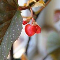 И у цветов есть сердце :: Дмитрий Лебедихин