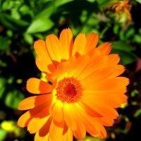 Оранжевое солнце :: Александр Надежин