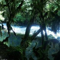 Сказочный лес у Чёрной реки :: Елена Павлова (Смолова)