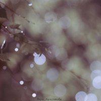 Капли, блики и боке :: Вера Арасланова