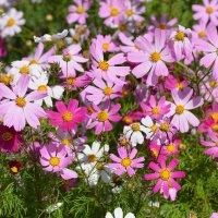 целое море цветов :: linnud