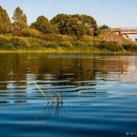 Теплая вода :: Игорь Вишняков