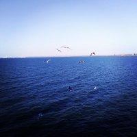 Черное море :: Любовь Антонова
