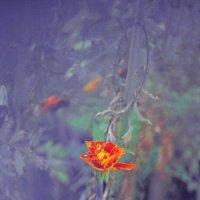 Цветок. :: Полина Ямина
