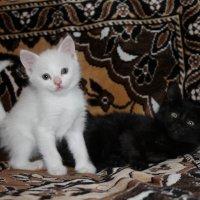 черный и белый :: Багдат Сайнанов